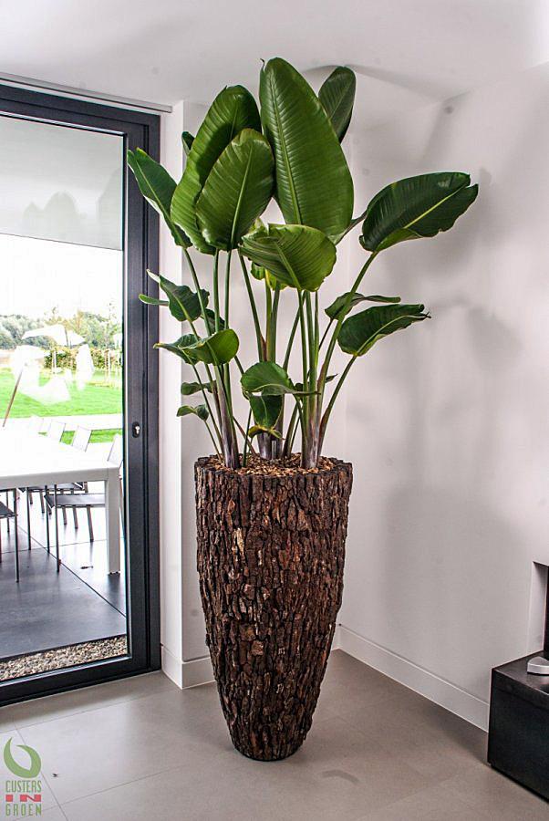 Interieurbeplanting moderne woning for Interieur beplanting